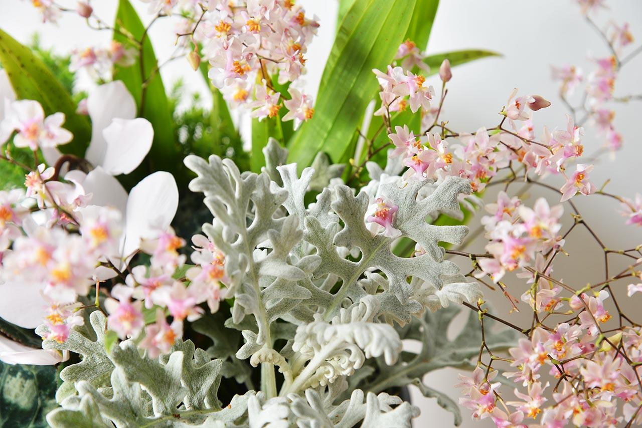 蘭花盆栽特寫