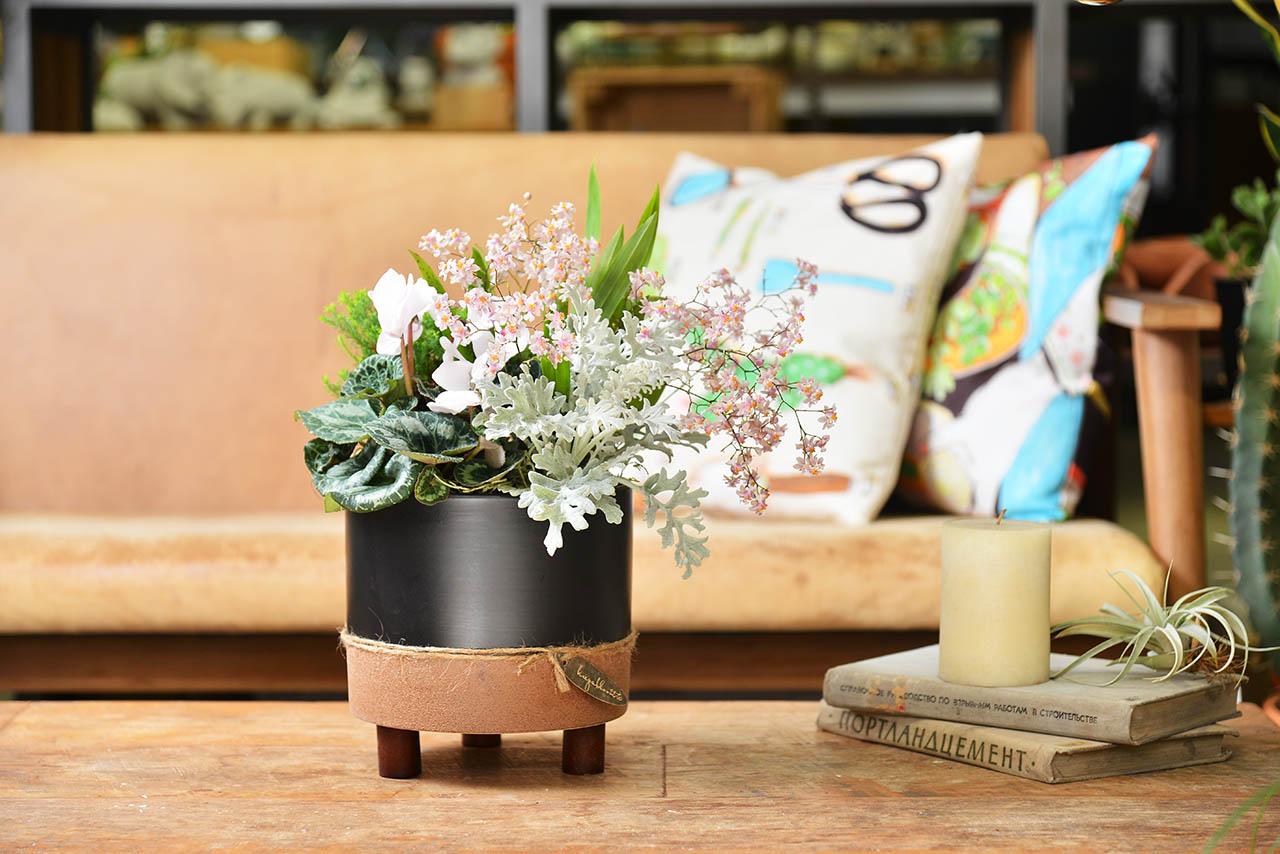 迷你蝴蝶蘭桌上型盆栽