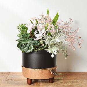 2020蘭花盆栽
