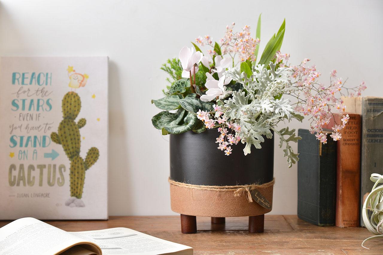 蘭花桌上盆栽