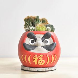 招福達摩盆栽