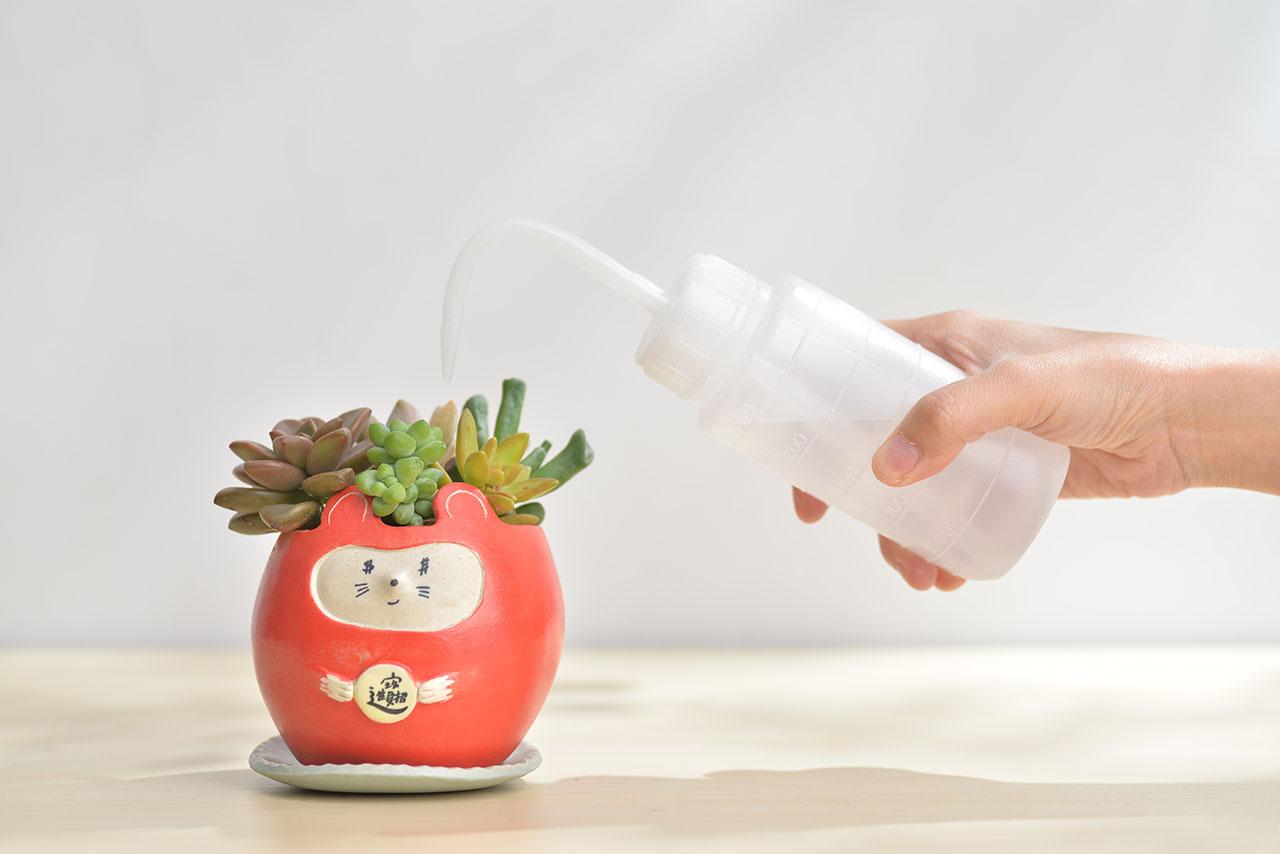 多肉Q&A:多肉植物正確澆水方式大公開 招財進寶盆4