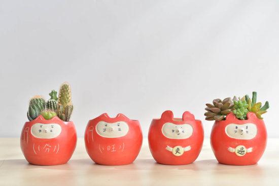 22 種小陽台適合的佈置植物推薦 招財進寶盆5