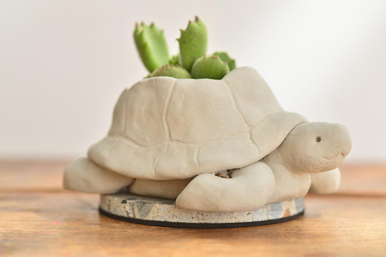 熱帶非洲 - 毛寶烏龜 熊童子盆栽3