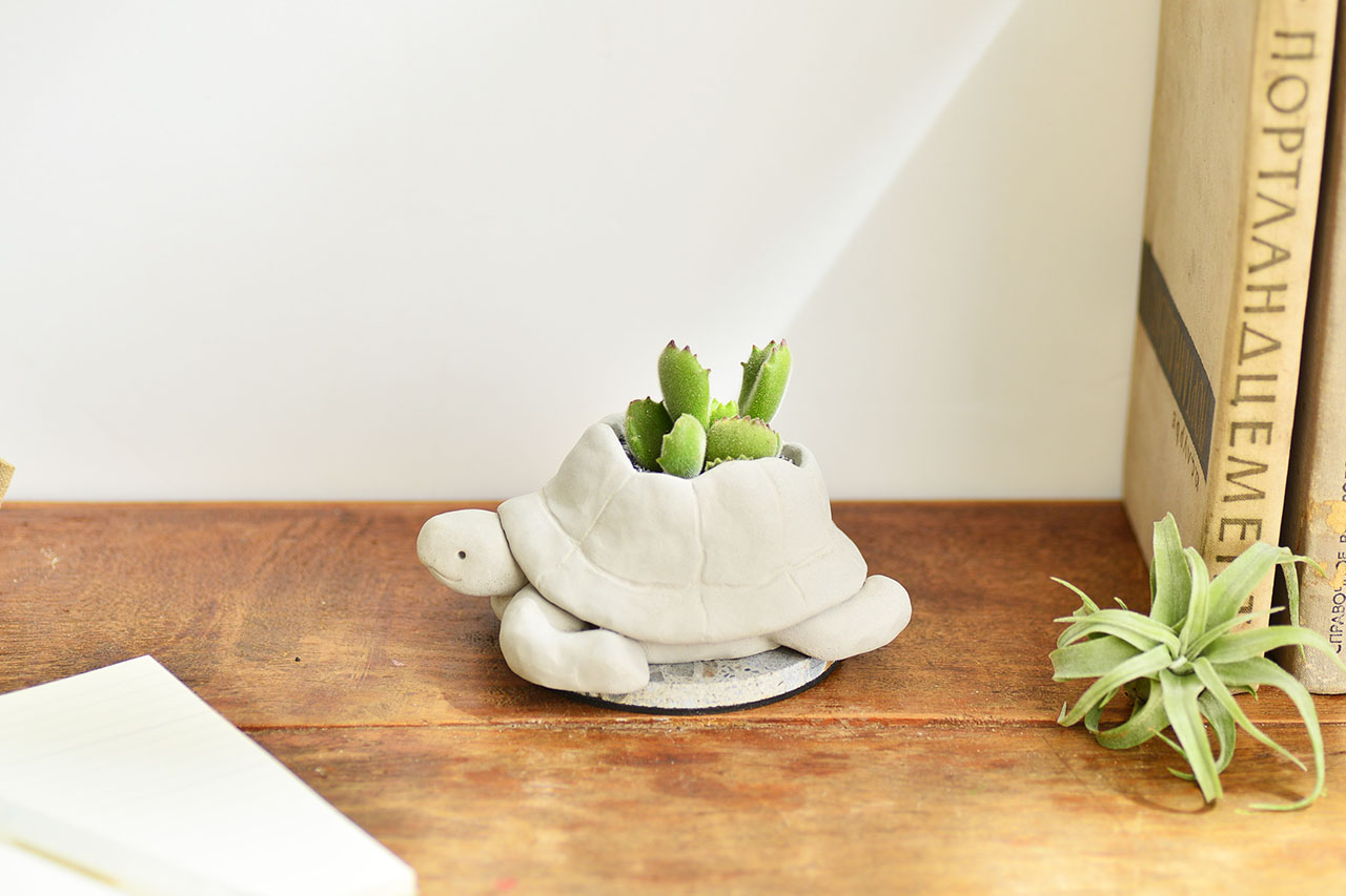 熱帶非洲 - 毛寶烏龜 熊童子盆栽8