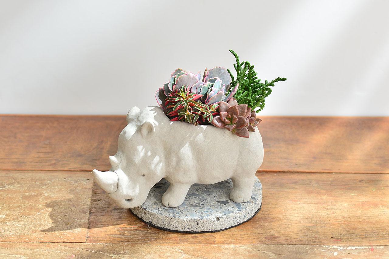 熱帶非洲 - 燦爛犀牛 生日禮物10