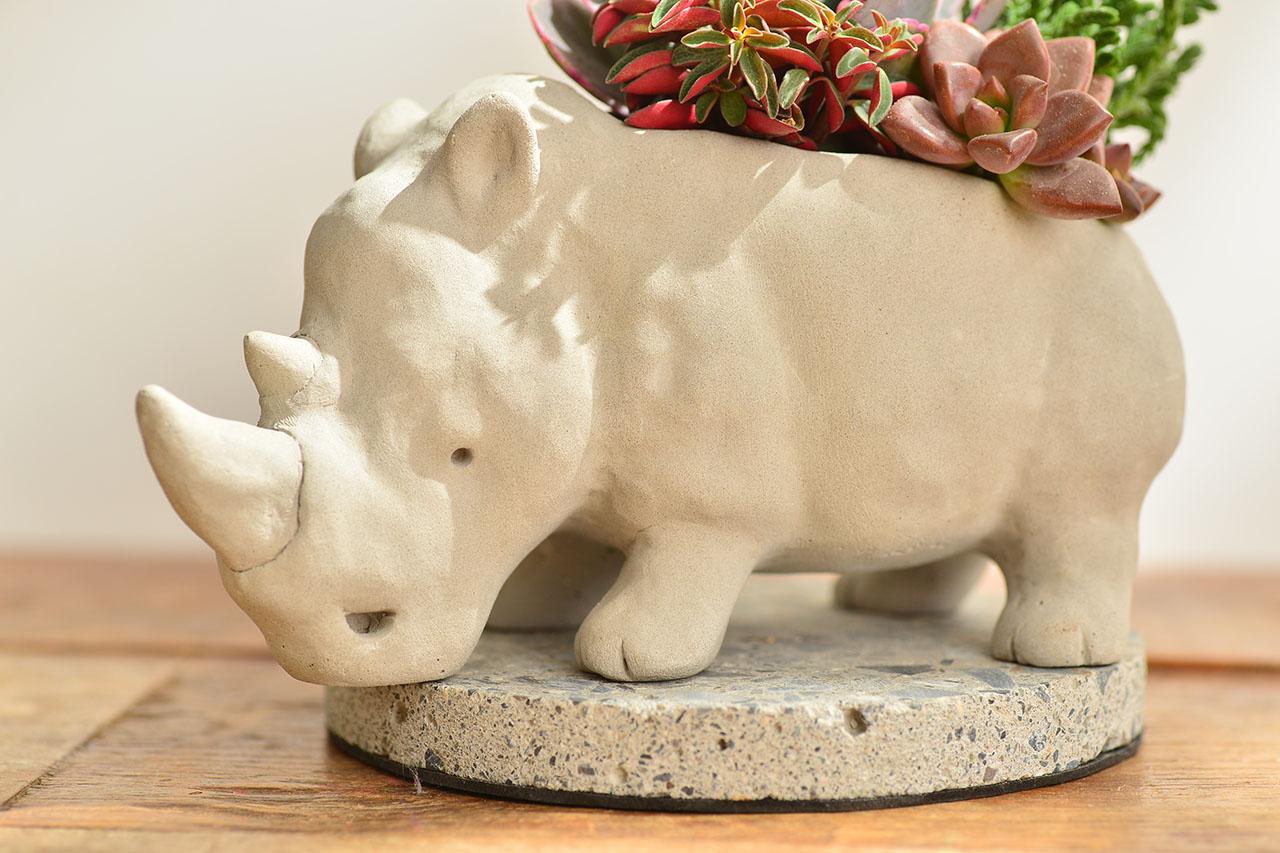 熱帶非洲 - 燦爛犀牛 生日禮物4