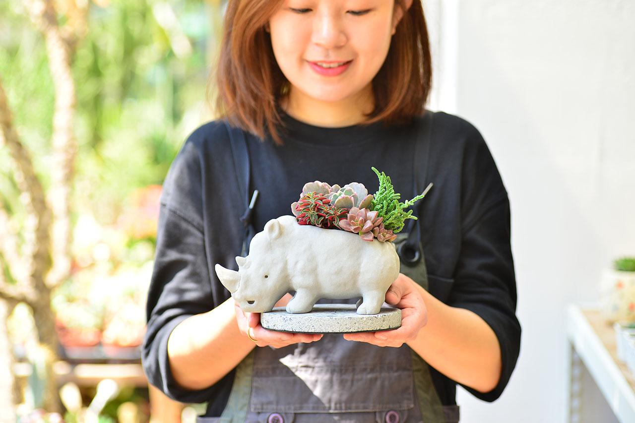 熱帶非洲 - 燦爛犀牛 生日禮物7