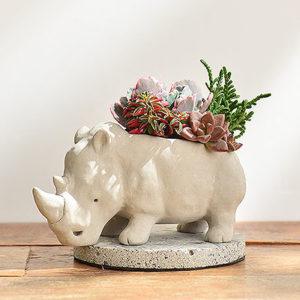 熱帶非洲 - 燦爛犀牛 生日禮物8