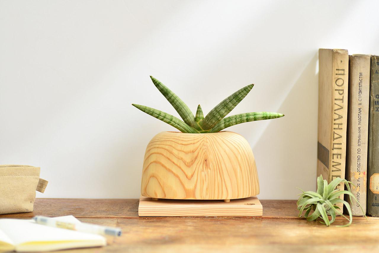 特殊虎尾蘭盆栽