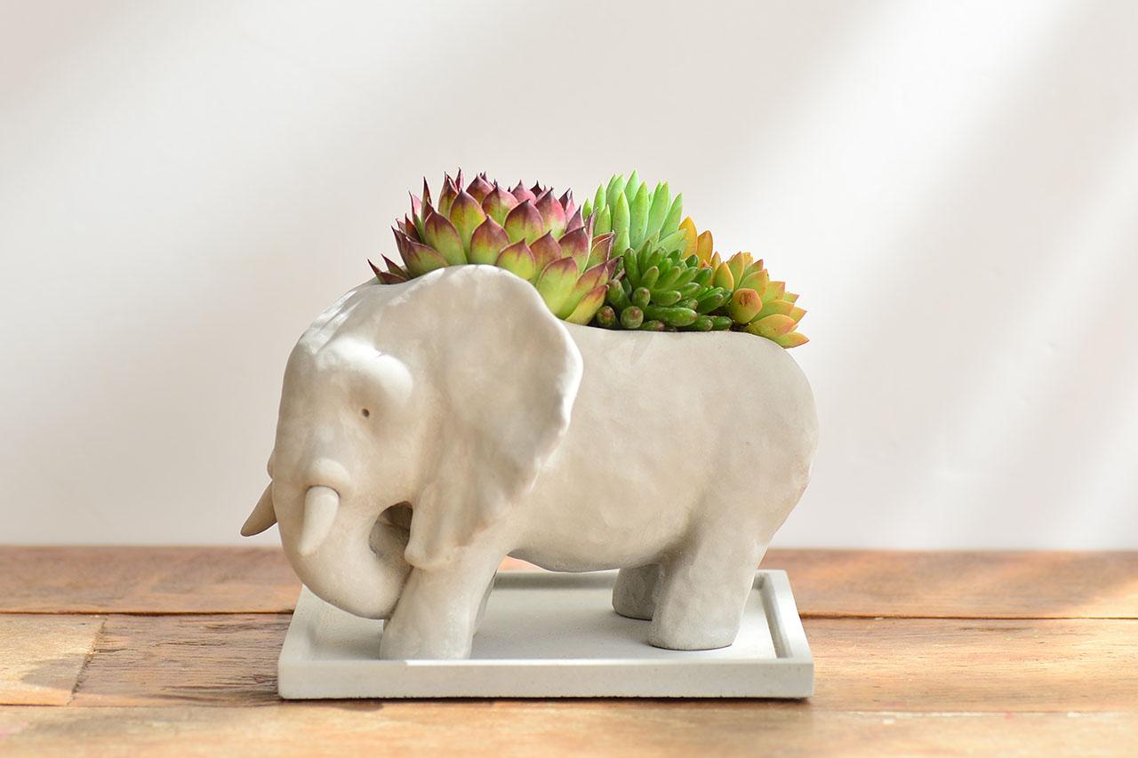 熱帶非洲 - 花現大象 03062020開幕升官送禮盆栽 036