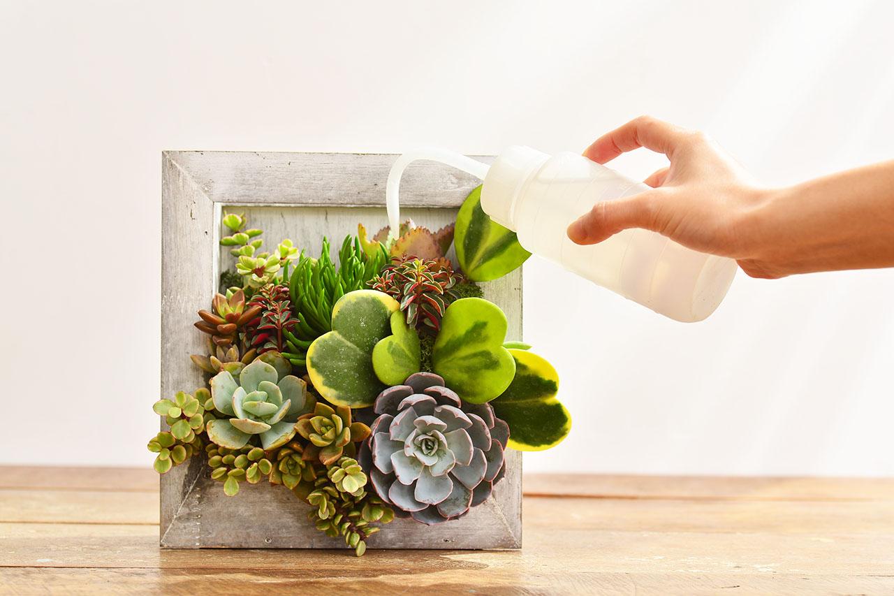 木框植物養護照顧