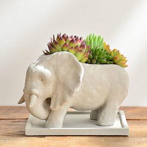 熱帶非洲 - 花現大象 03062020開幕升官送禮盆栽 400