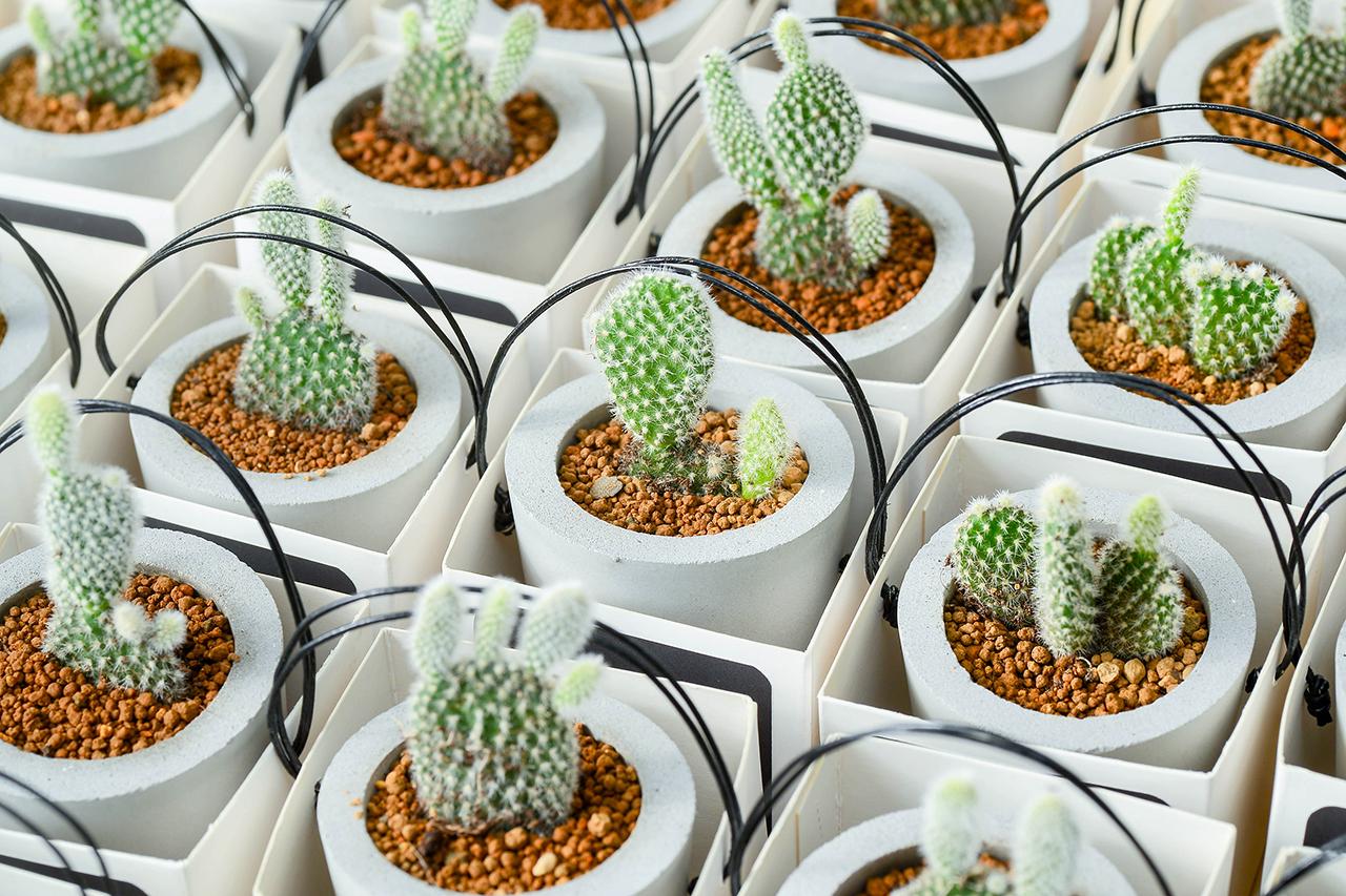 多肉植物專用介質 - 唐山石 appier 水泥盆 17