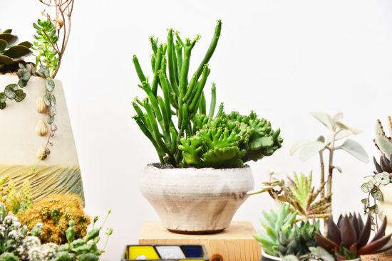 台灣盆器 / 植栽新設計(2020 第一季) 植栽新設計(2020 第一季)土口作品6
