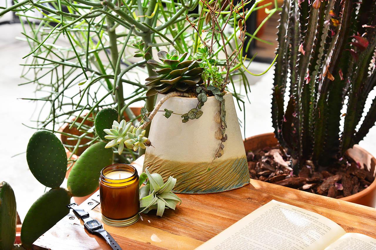 桌上型盆栽