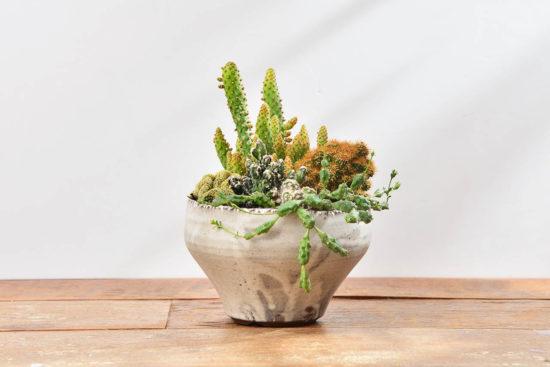 台灣盆器 / 植栽新設計(2020 第一季) 植栽新設計(2020 第一季)Tuko作品1
