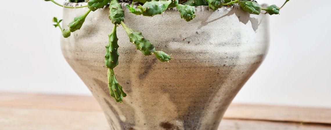 土口 TOOCO 植栽新設計(2020 第一季)Tuko作品3