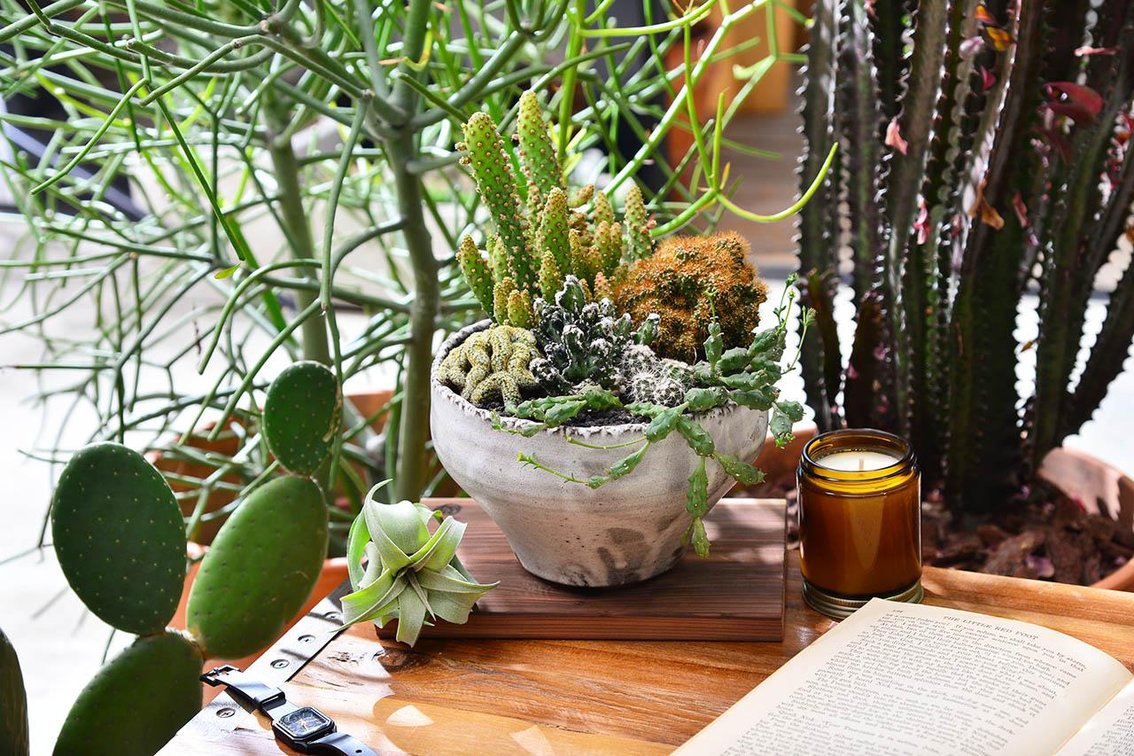 桌上仙人掌盆栽