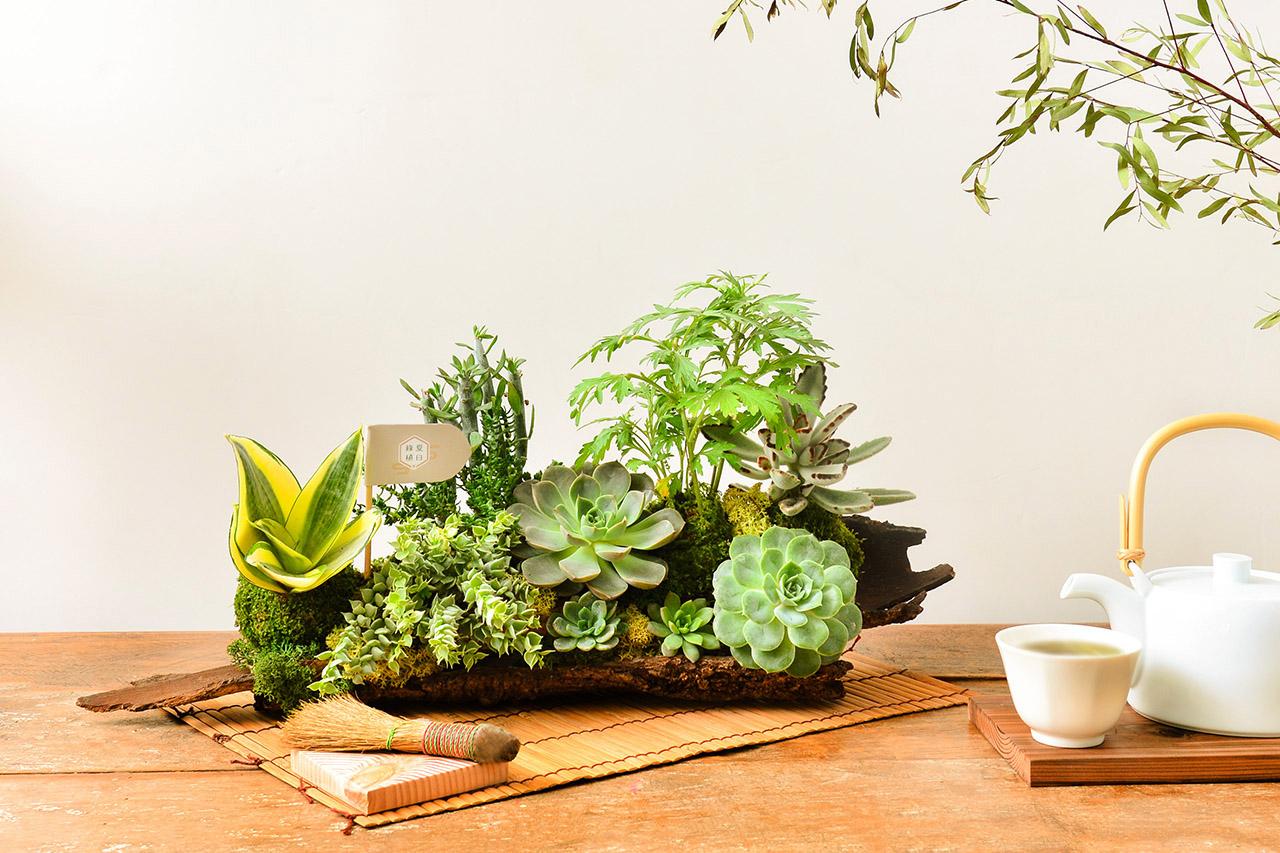 客製化多肉盆栽禮贈品 2020端午節植物系禮盒1