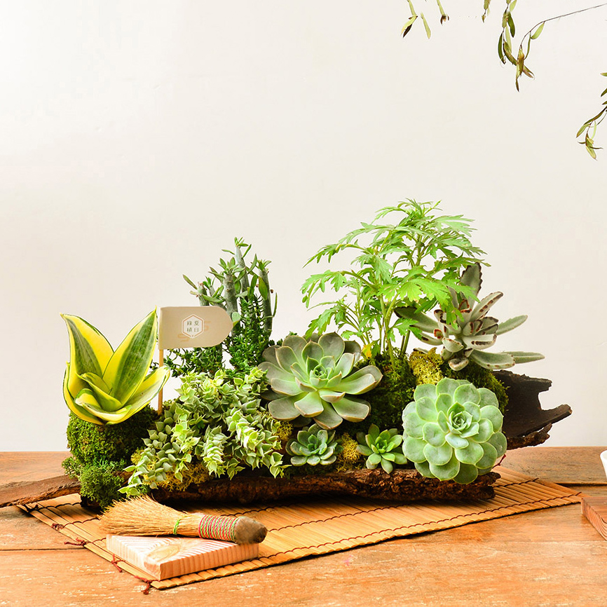 有肉 Succulent & Gift - 官方網站 7