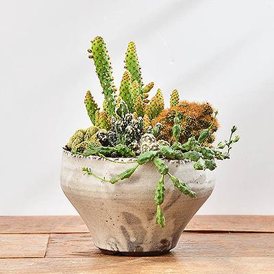 2020仙人掌盆栽