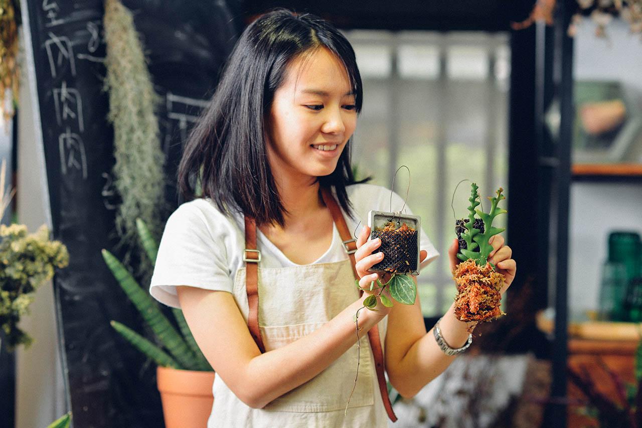 室內植物照顧作品