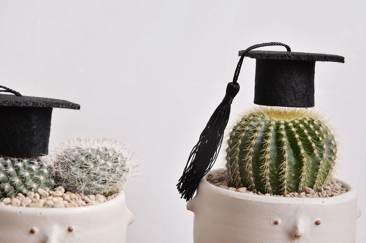 畢業送植物