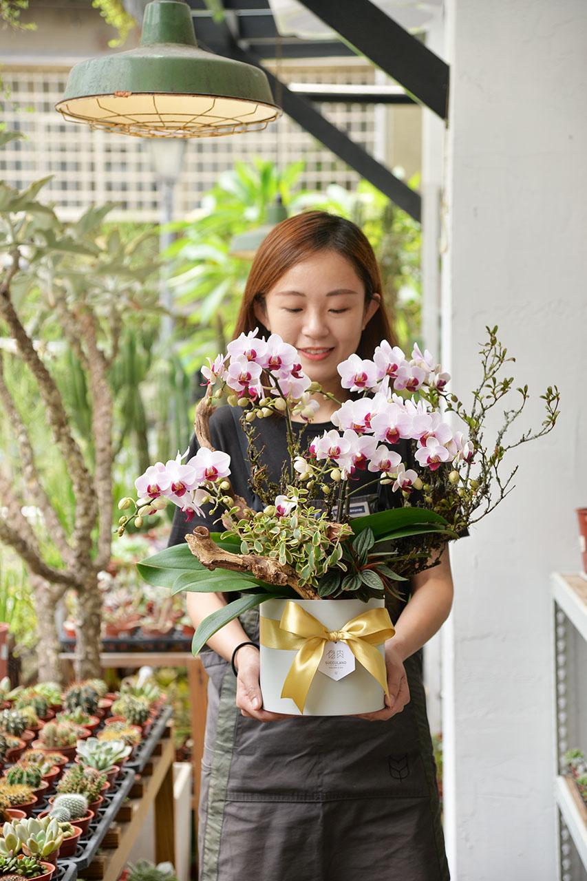台北蘭花盆栽