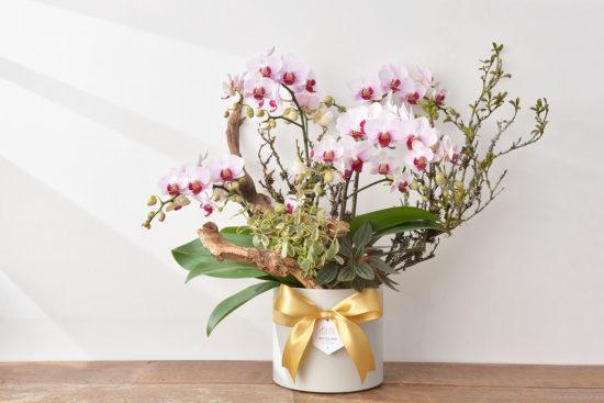 蘭花也算是多肉植物?教你如何照顧 3