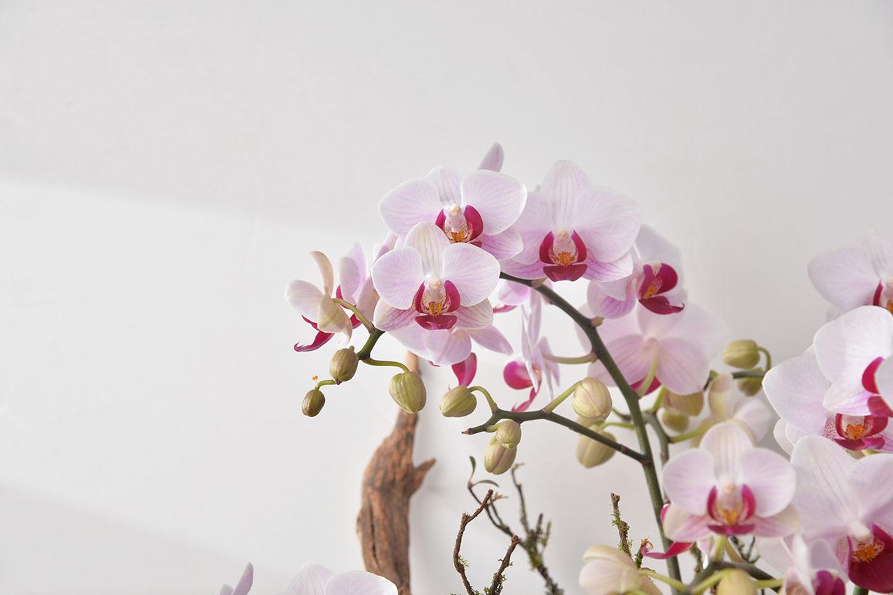 粉紅色花盆栽
