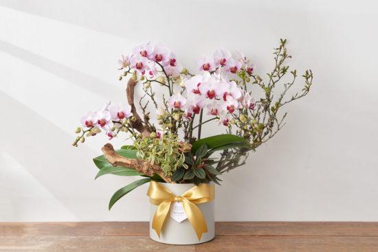 粉紅色蘭花盆栽