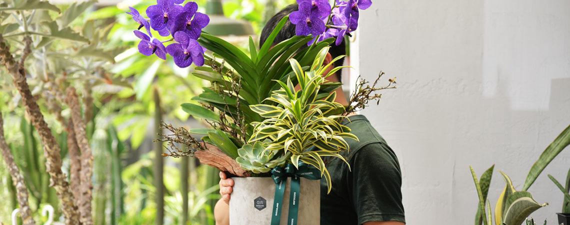 桌上型蘭花盆栽送禮推薦