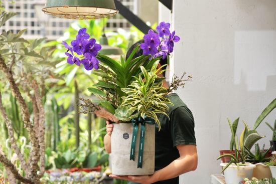 落地型蘭花盆栽