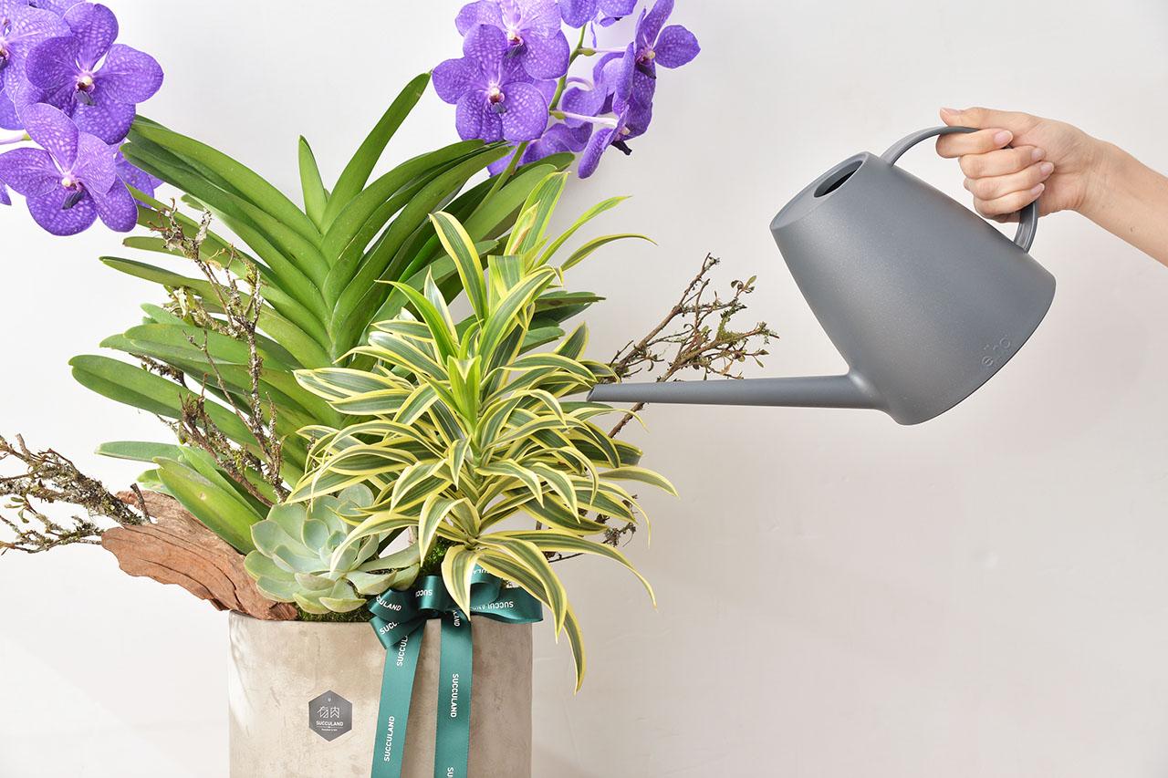 蘭花盆栽照顧