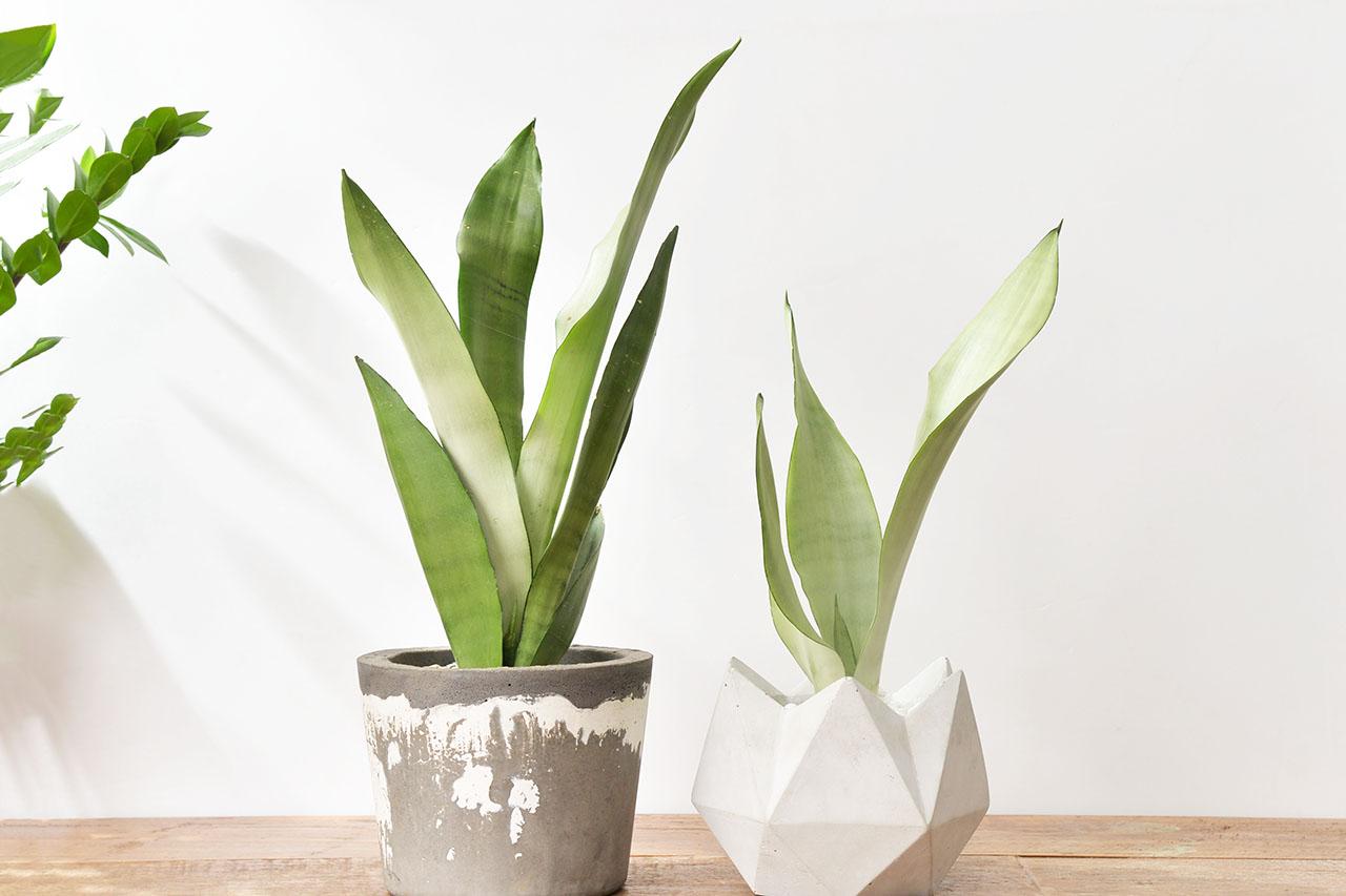 室內植物介質