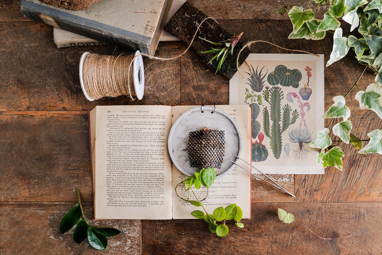 室內植物養護教學課程