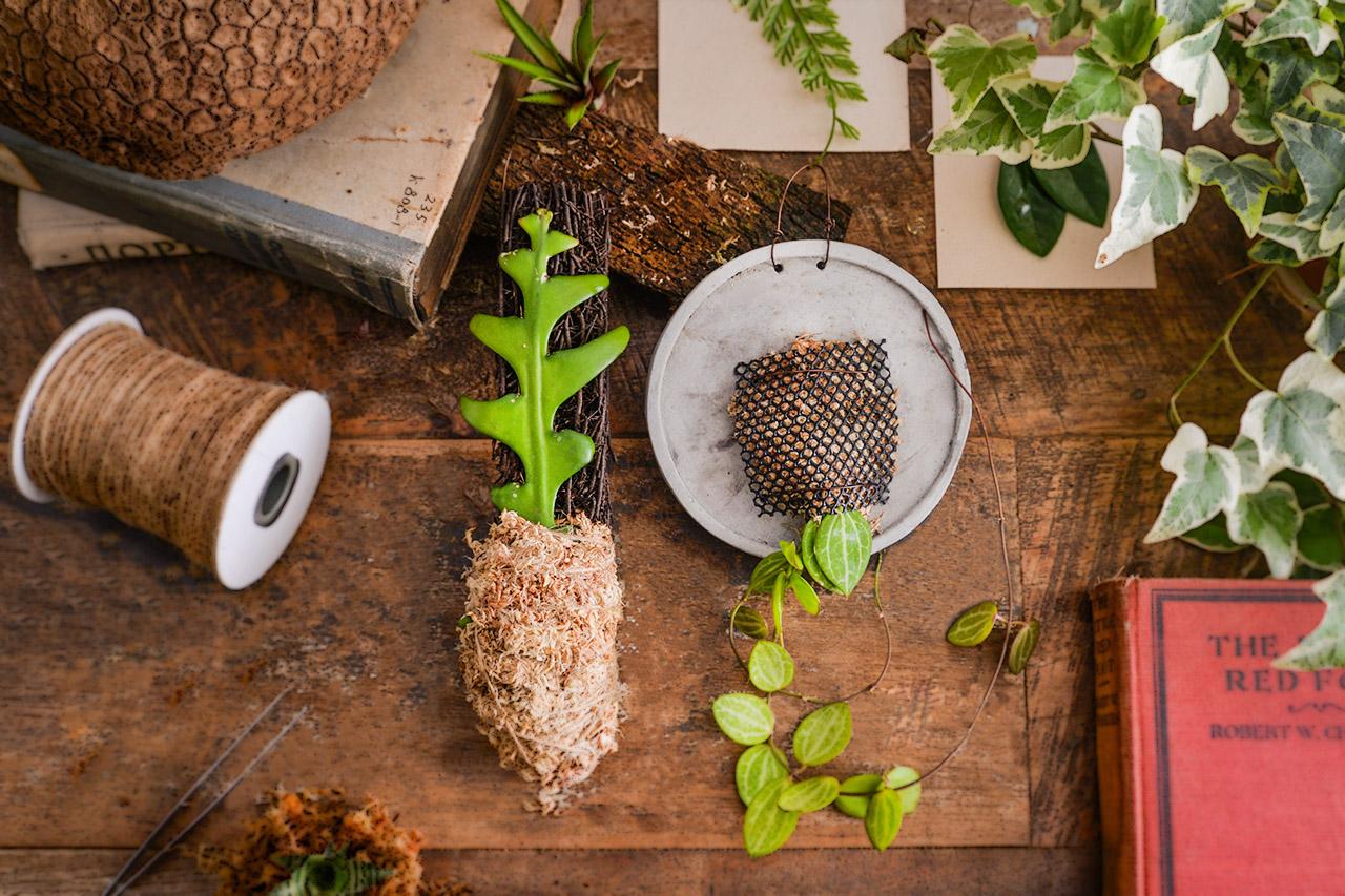 2020 室內植物課