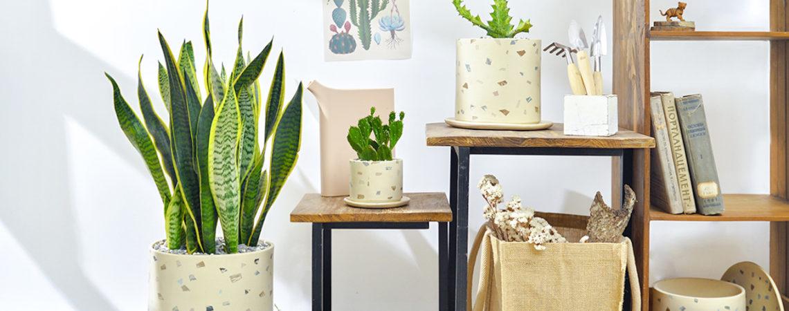 室內植物推薦與照顧教學