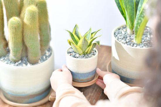 9 種室內植物推薦&植物照顧教學 6