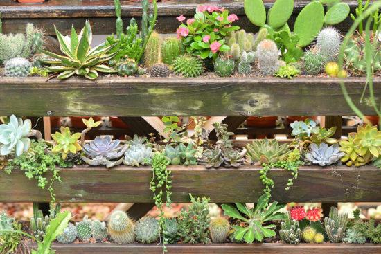 植物牆導覽介紹活動