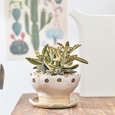 溫暖兔子盆栽