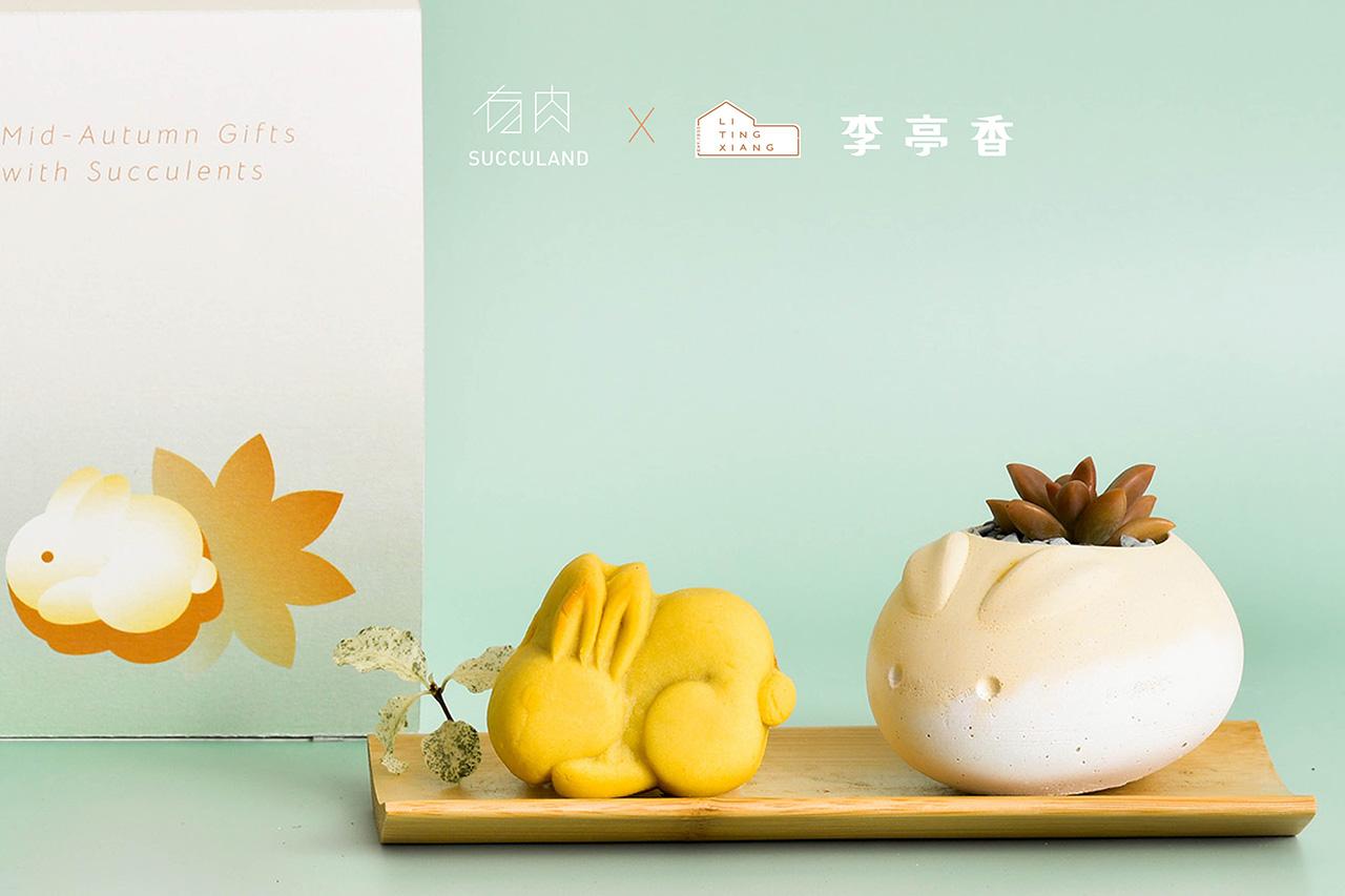 月餅盆栽聯名禮盒