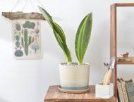 虎尾蘭盆栽的新設計!六種美好呈現 4