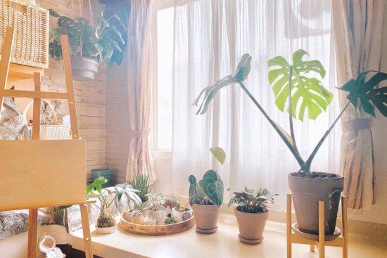 與植物談戀愛!專訪張景嵐:因為「他」我學會斷捨離 2
