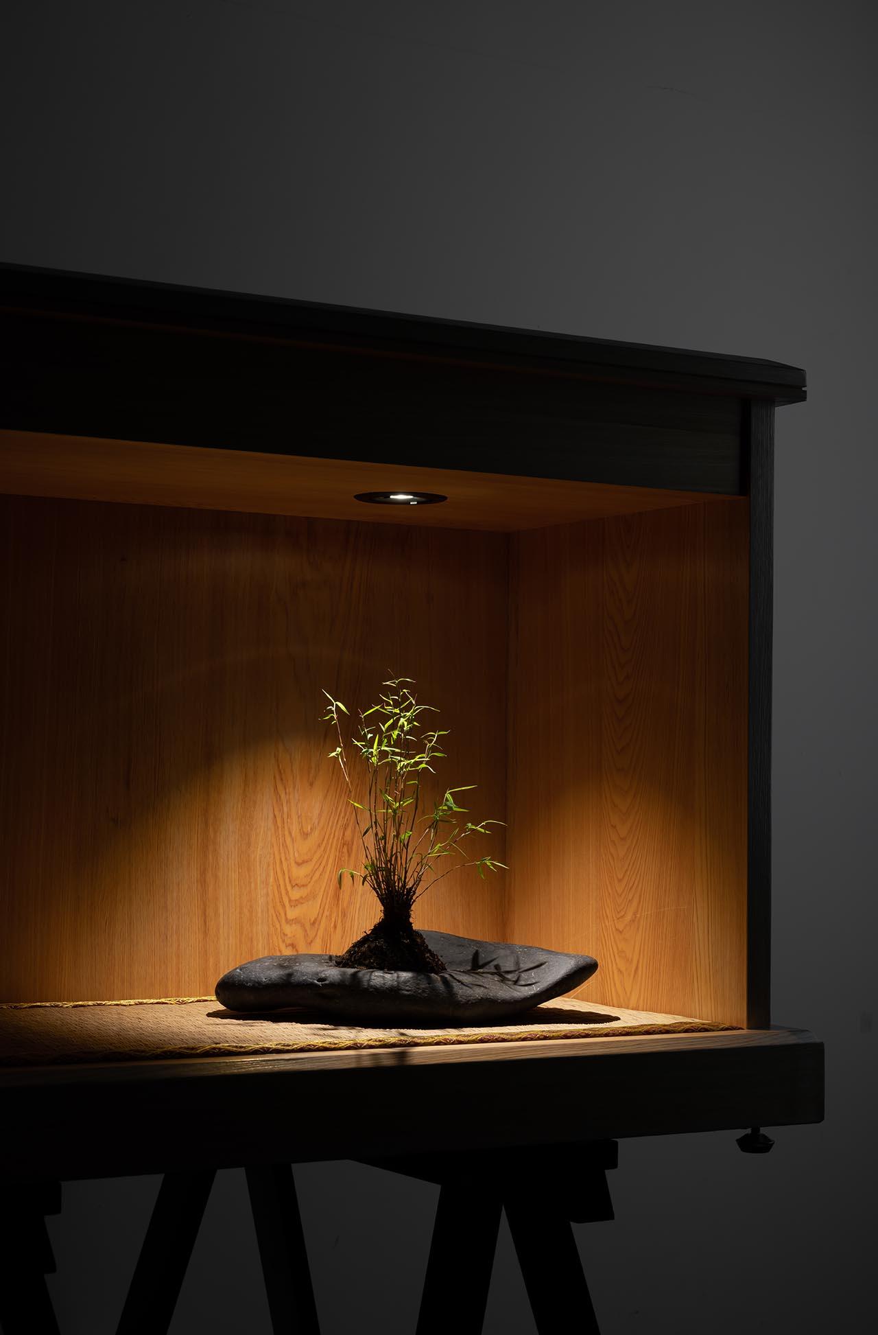 坎燈植物燈