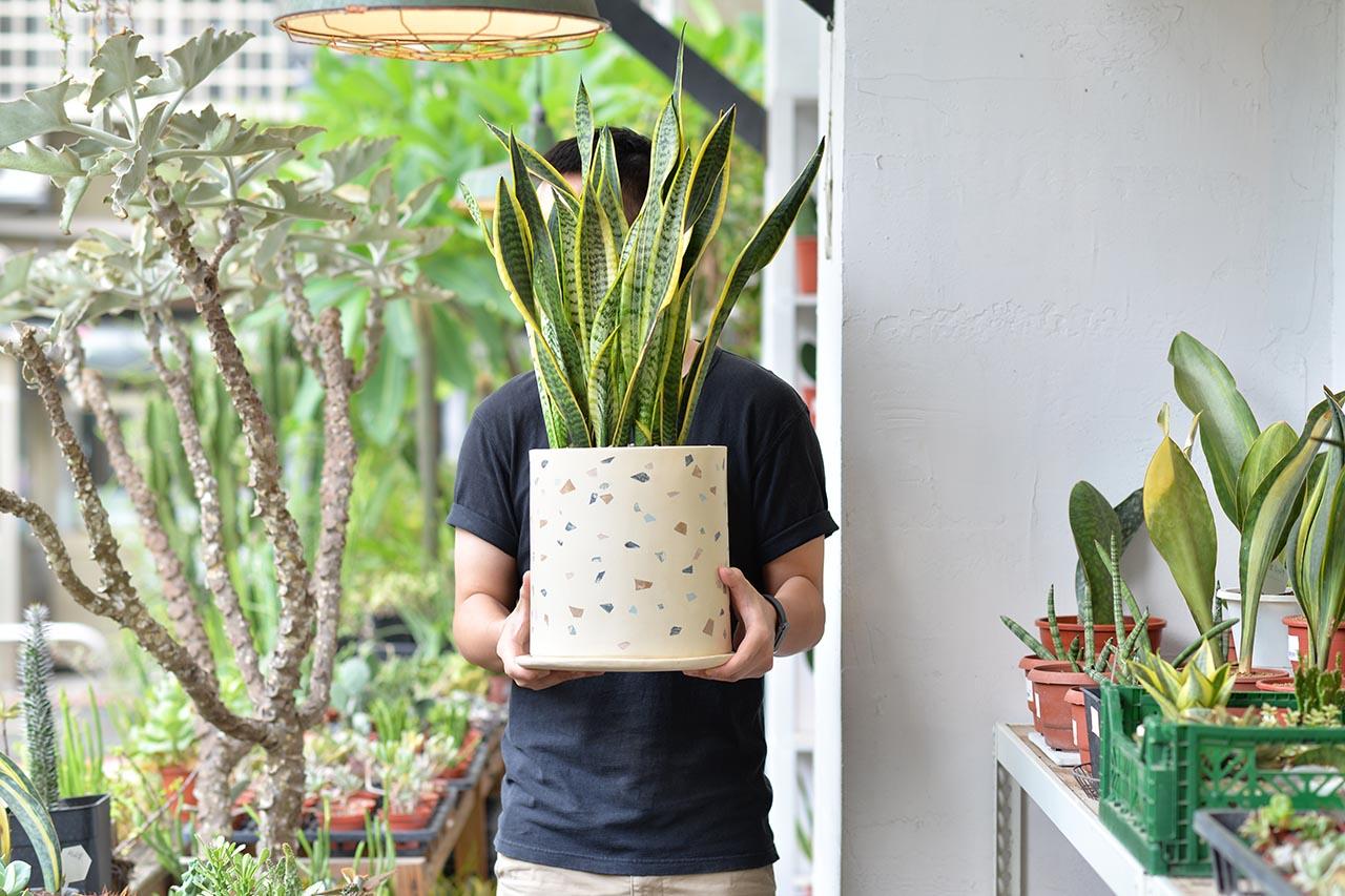 虎尾蘭盆栽設計