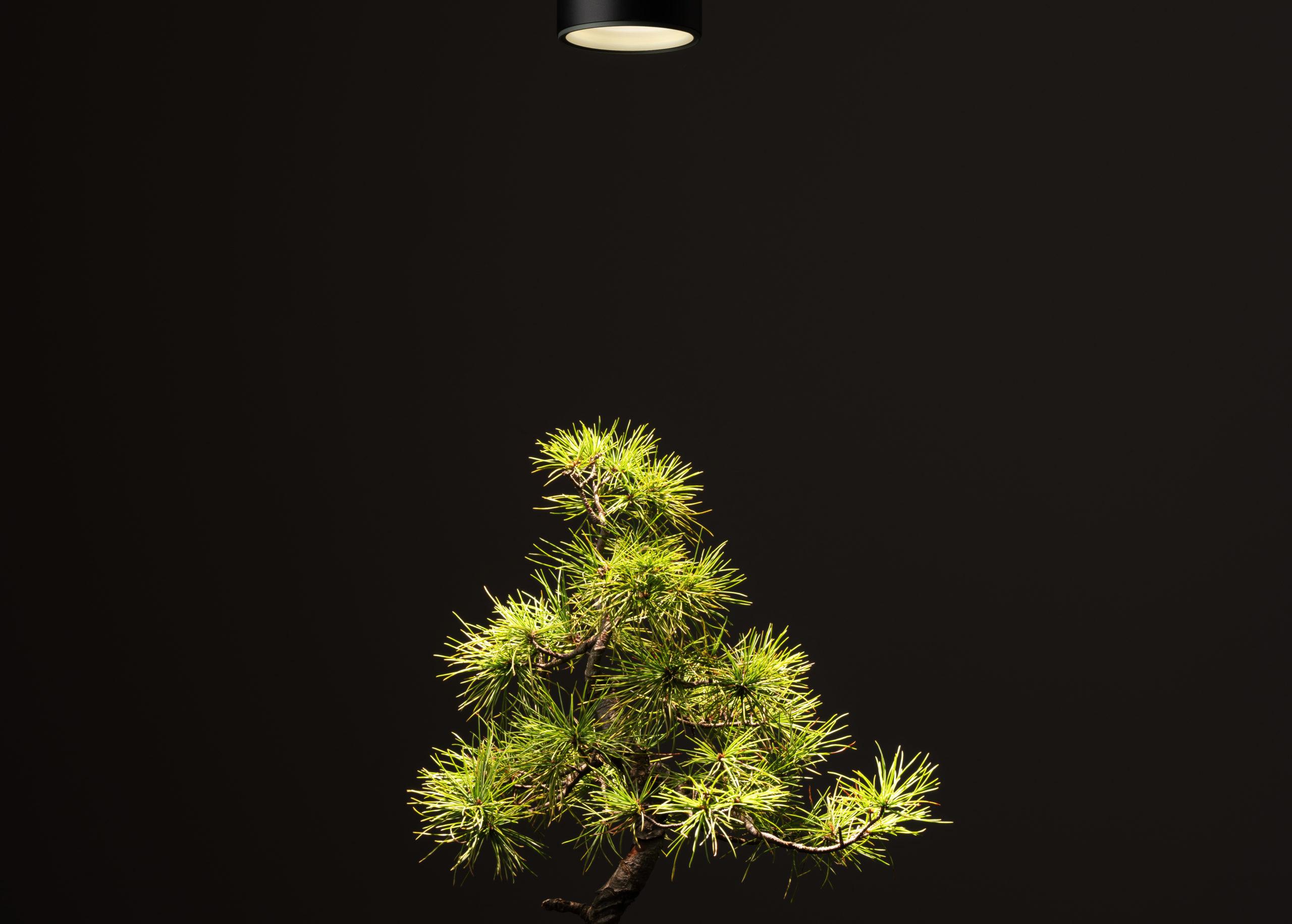 OURA 室內植物燈 - 調光式軌道燈 3D均光比較圖 01有 scaled