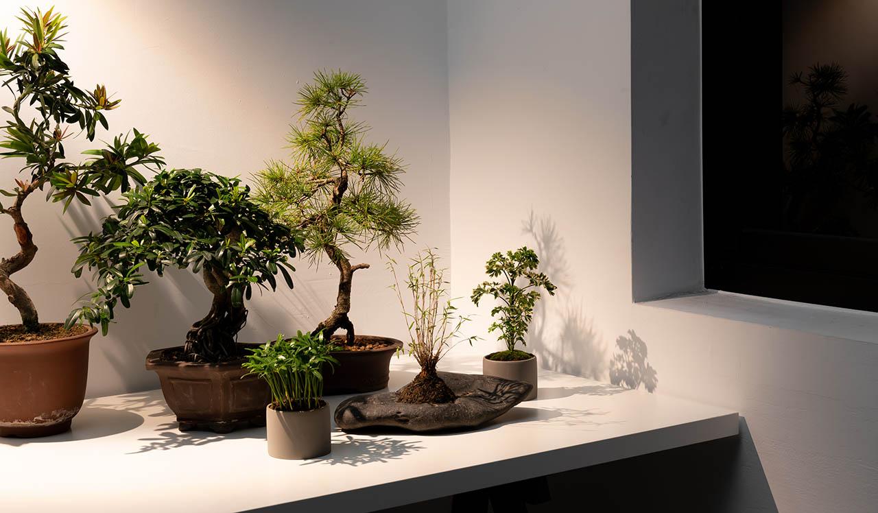 植物燈光照時間