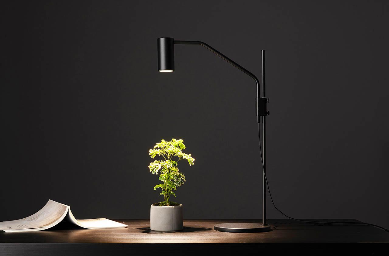 桌燈植物燈